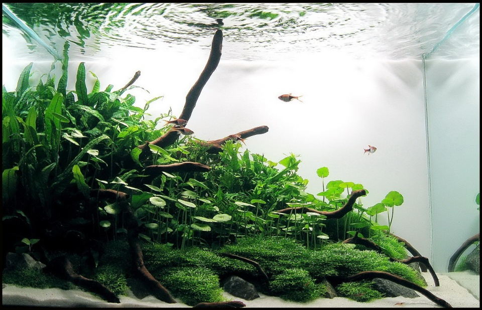 Green Freshwater Nature Aquarium