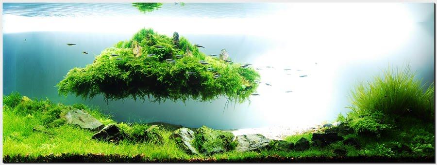 Floating Island Aquascape