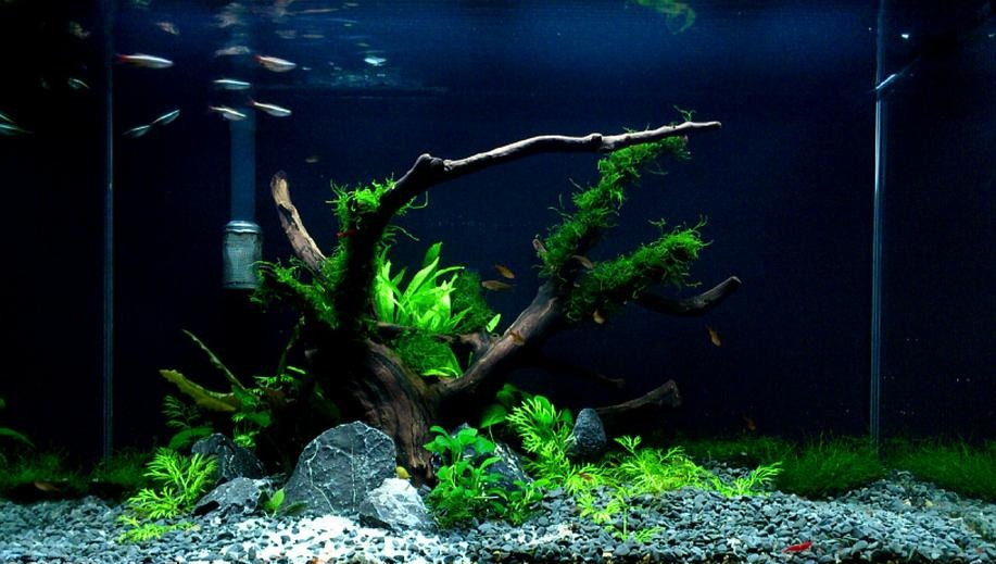 Custom Grey Freshwater Aquascape