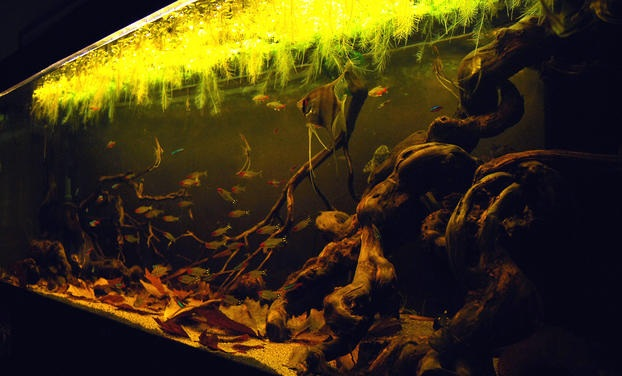 Blackwater Aquascape with Natural Ceiling