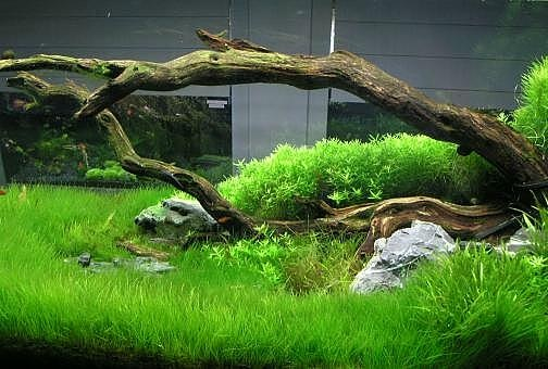 Aquarium With Brown Driftwood