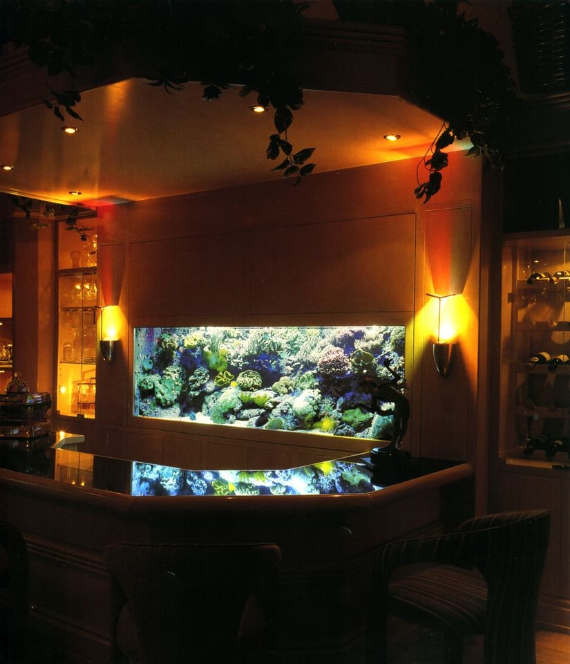 Tropical Aquarium Behind a Bar