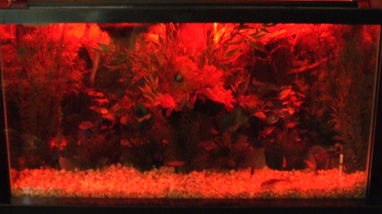 Red Aquarium