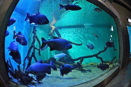 Saltwater Blue Aquarium