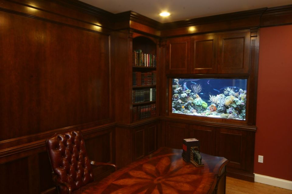High Class Aquascape with Rich Colors