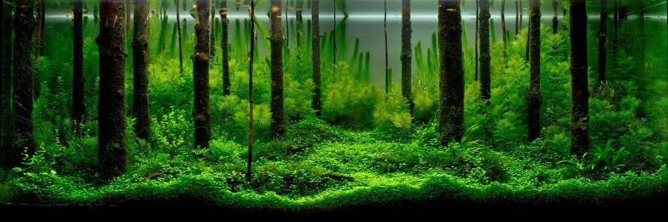 Freshwater Forest Aquascape