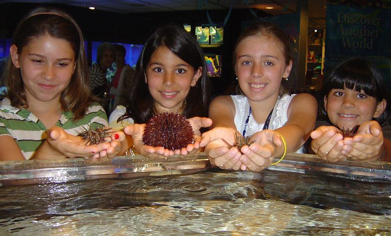 Girls Holding Urchins in a Touch Tank