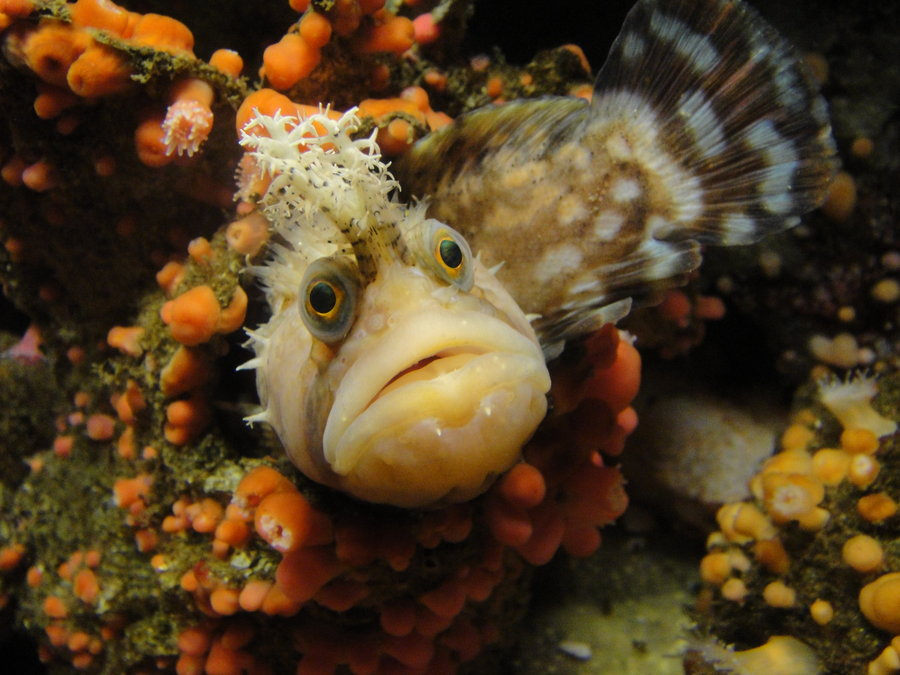 This Grumpy Creature is Experiencing Fish Stress
