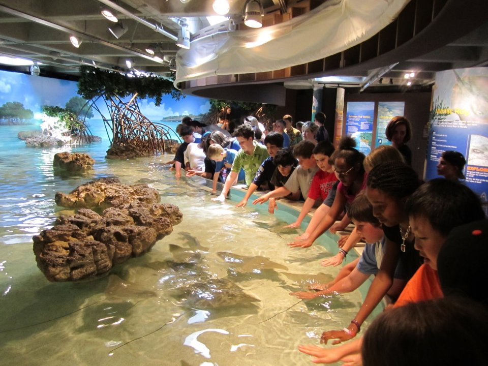 Touch Tank at a Public Aquarium