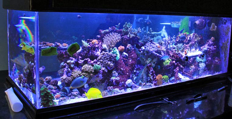 Blue Saltwater Aquarium