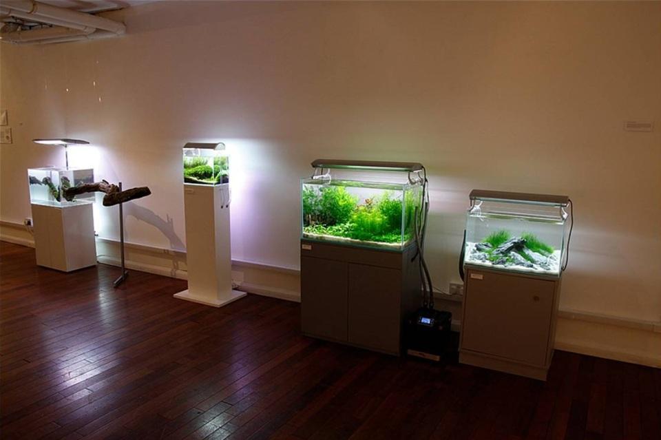 Aquascape Art Gallery