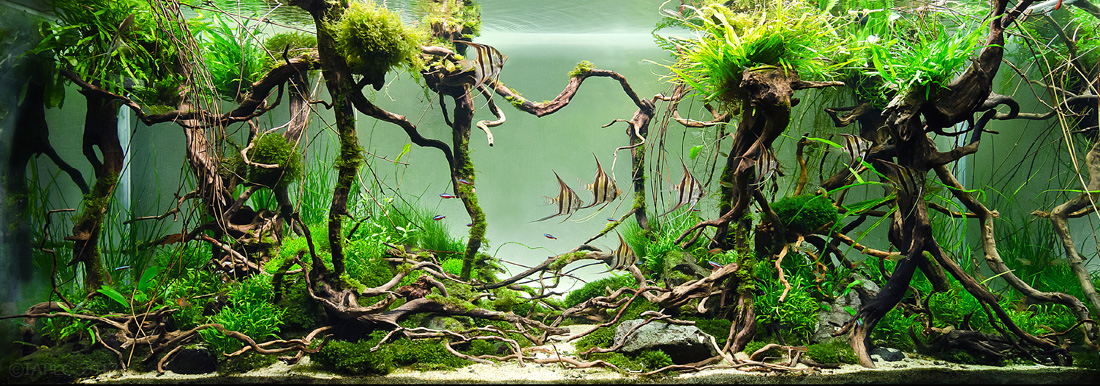 Aquascape With Tall Plants