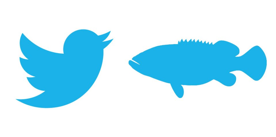 Twitter Logo with Fish