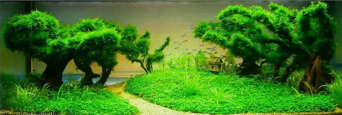 Underwater Trees With Tetra Fish