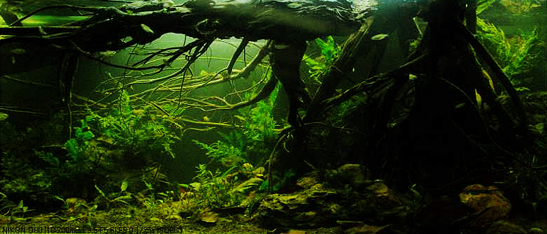 Aquascape with Branches acting as a Natural Ceiling