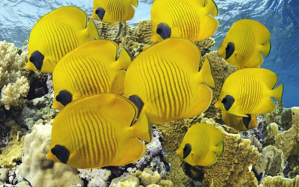 Tropical Yellow Fish