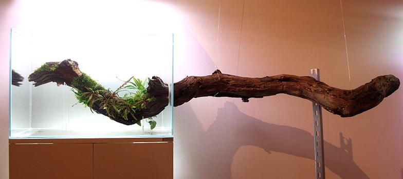 Horizontal Branch Aquascape