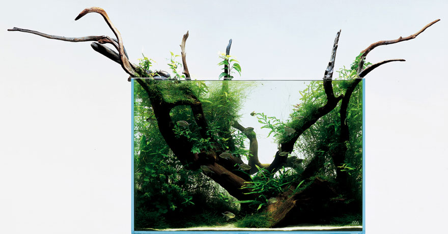 Freshwater Aquascape with Branches