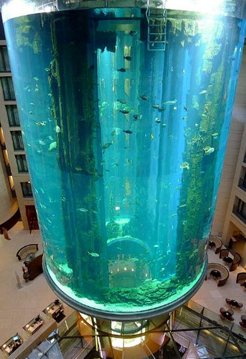 AquaDom Cylindrical Aquarium