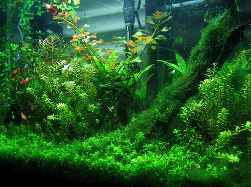 The 3 most important things about picking freshwater for Planted tank fish