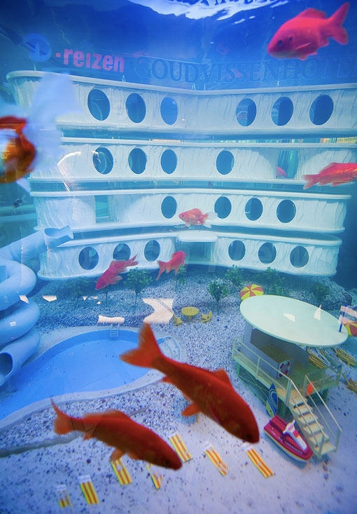 Fish Hotel with Swimming Pool