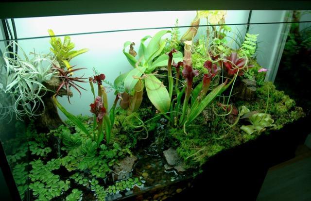 Paludarium with Pitcher Plants