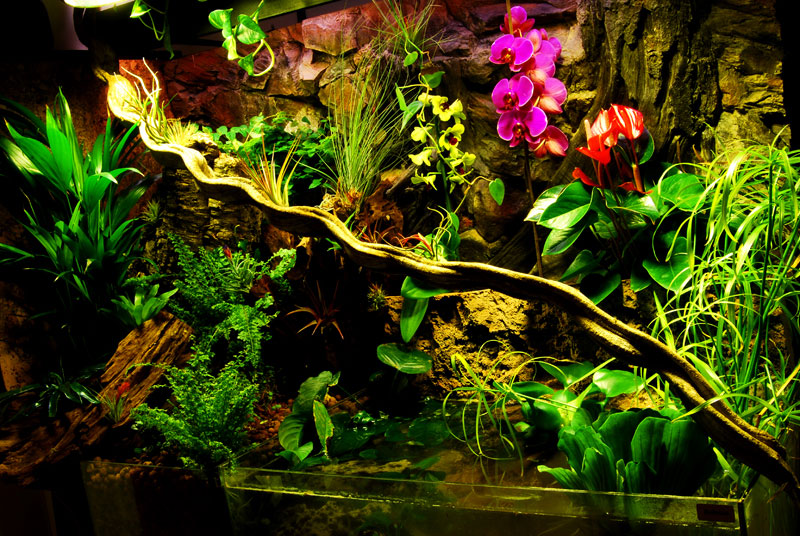 Paludarium with Orchids
