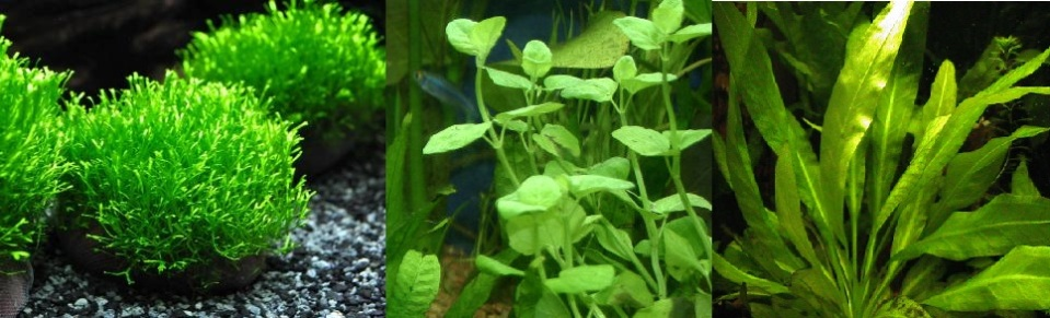 Aquarium Plants with Three Textures