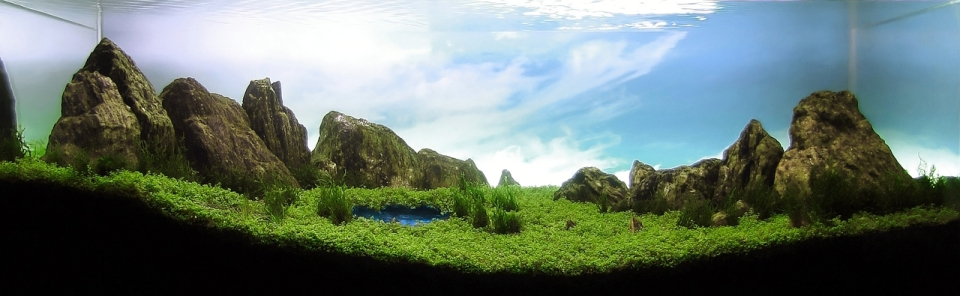 Freshwater Aquascape with Pool