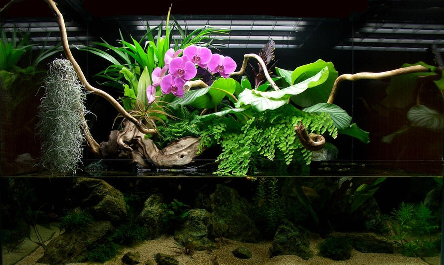 Paludarium with Pink Orchids