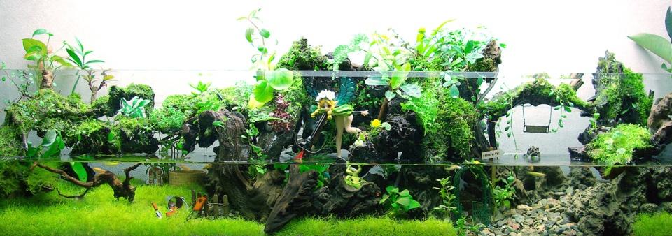 Magical Paludarium Forest