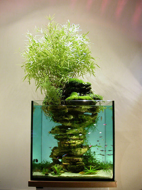Vertical Custom Aquarium