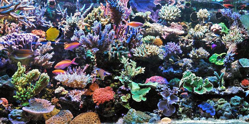 Complex Saltwater Aquarium