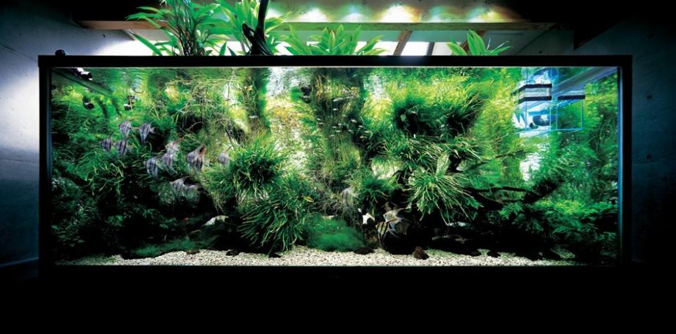 Complex Freshwater Aquarium