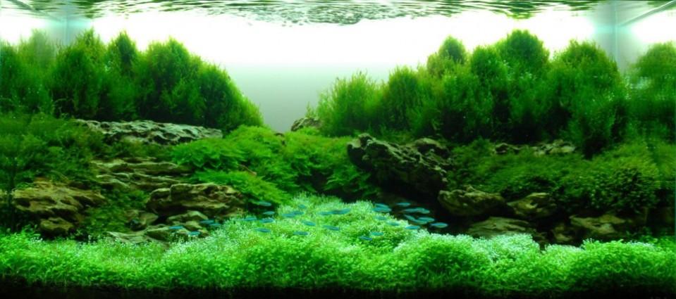 Freshwater Aquascape