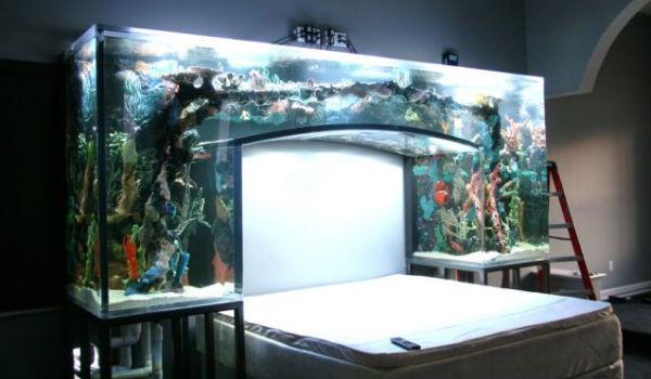 Chad Ochocinco Aquarium Headboard