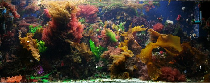 Coldwater Reef Aquarium