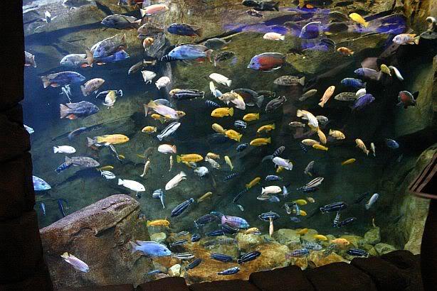 Overstocked Aquarium Tank