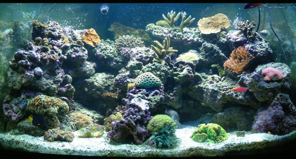 Elaborate Saltwater Aquarium
