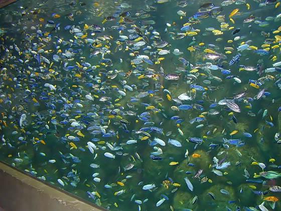 Overstocked Aquarium