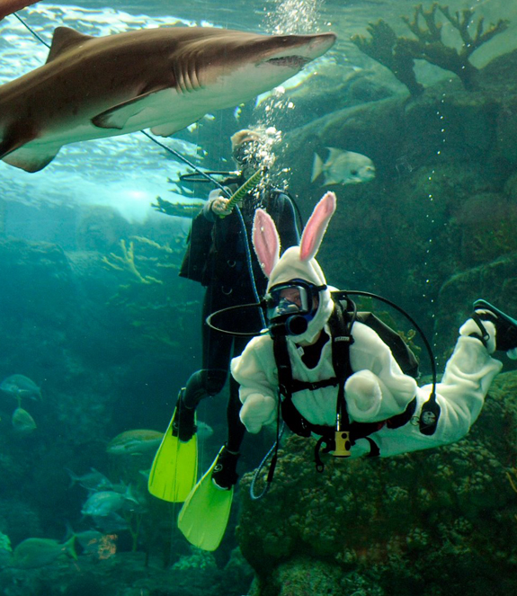 Easter Bunny in an Aquarium