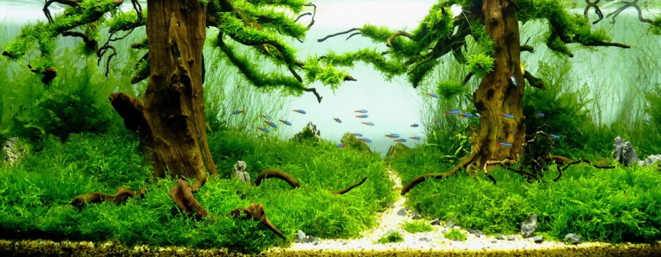 Freshwater Aquascape with Springtime Colors