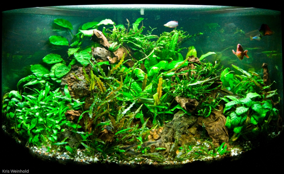Low-Tech Planted Aquarium