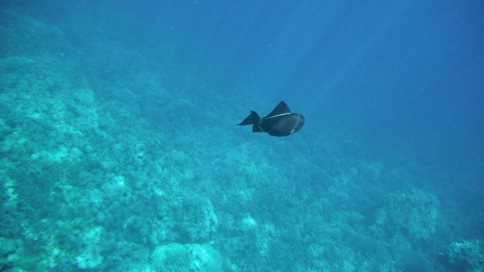 Lone Fish in the Ocean