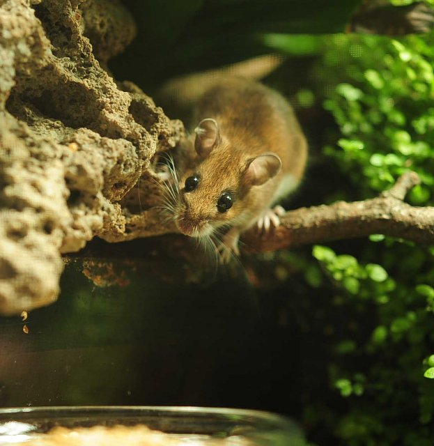 Mouse in a Paludarium