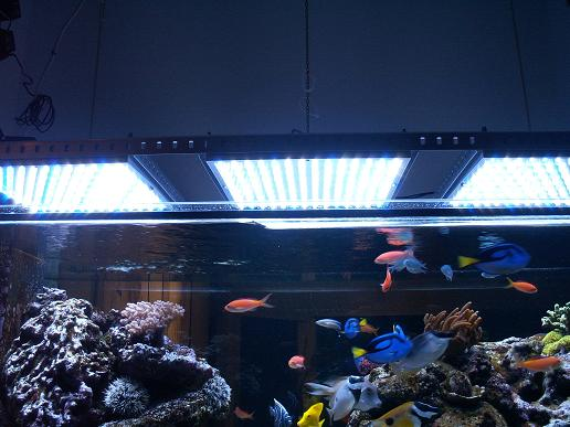 Aquarium with LED Lamp