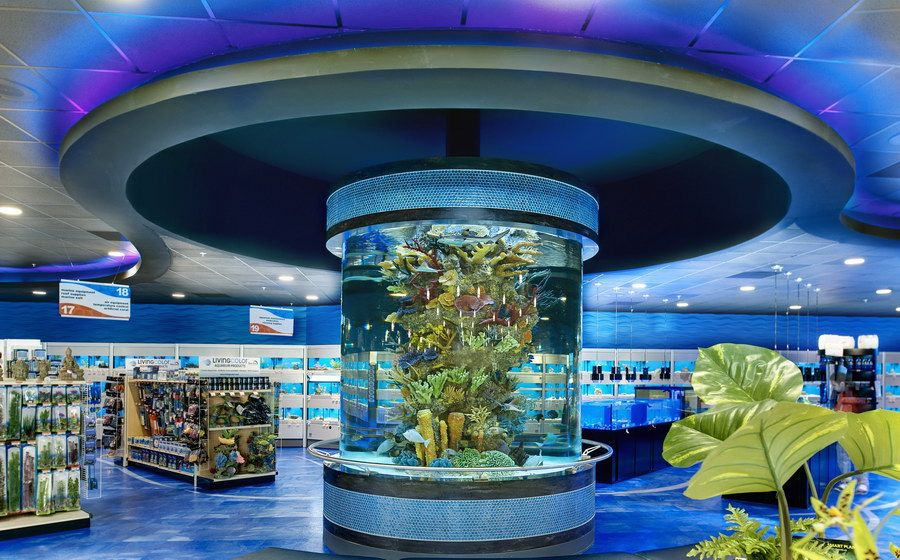 How To Design A 360 Degree Aquarium To Act As A Room 39 S