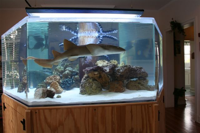 One is the happiest number aquariums with a single fish Small sharks for fish tanks
