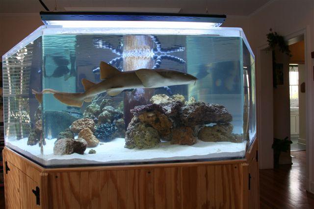 Aquarium with a Nurse Shark