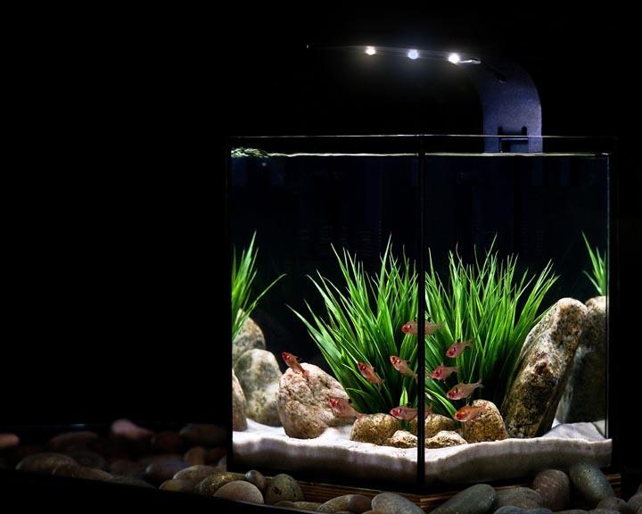 Minimal Freshwater Aquarium